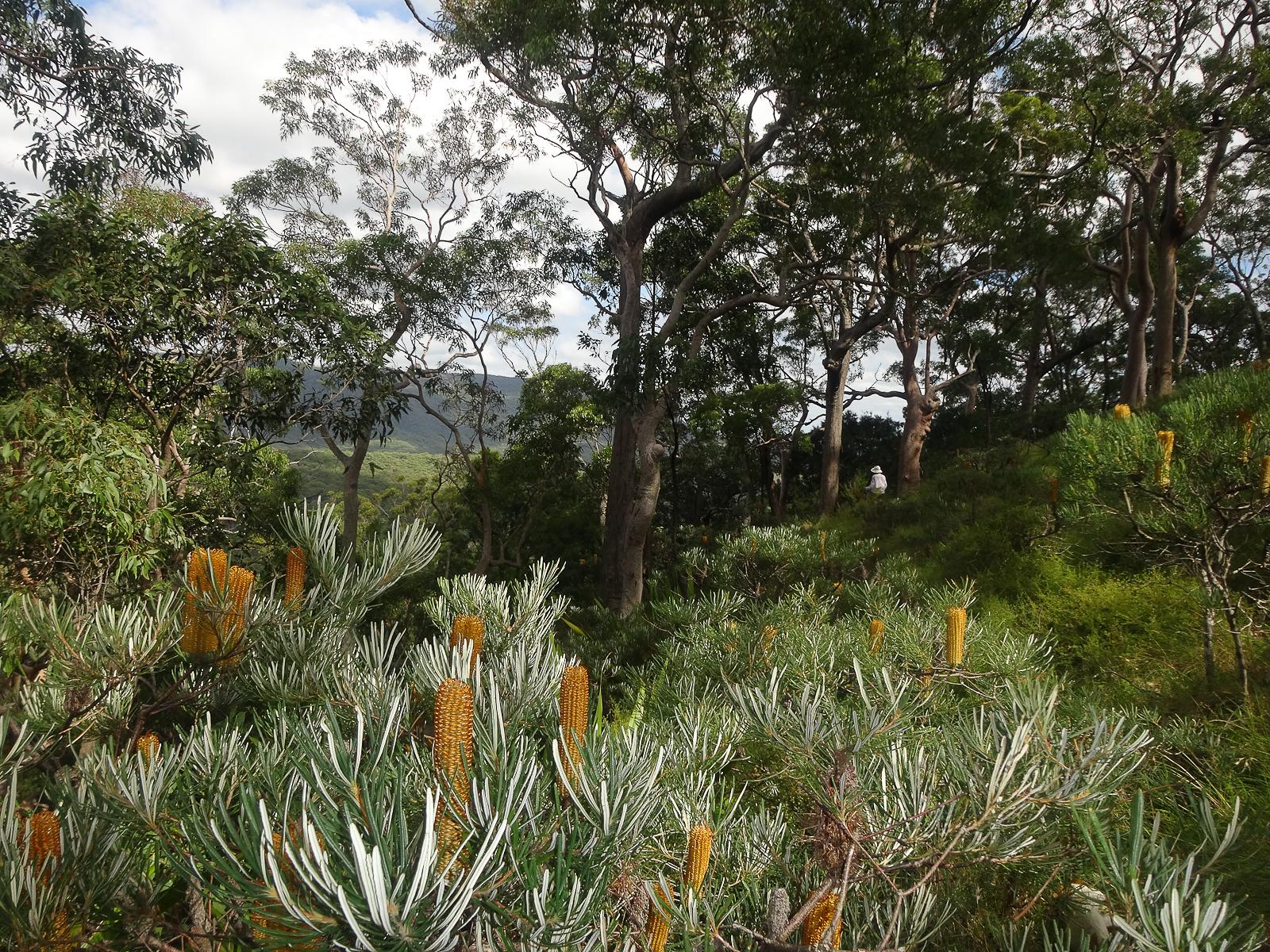 Cliff Top walk views